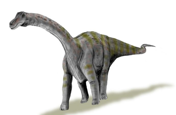 The Rapetosaurus would have been More Independent than other Species of Dinosaur
