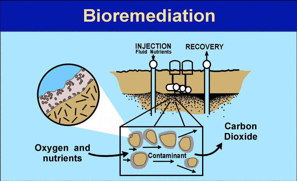research on bioremediation In 1990, an oil recycling plant situated in hammarsdale, south africa, was  decommissioned and a decision was taken by management to rehabilitate the  site in.