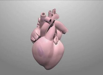 The Molecular Mechanisms that Ensure the Contractions of the Heart