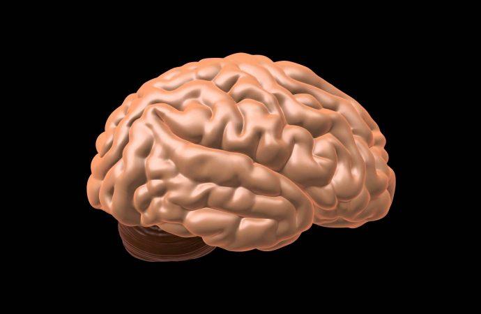 Maintaining Healthy Brain Slows Neurodegenerative Diseases