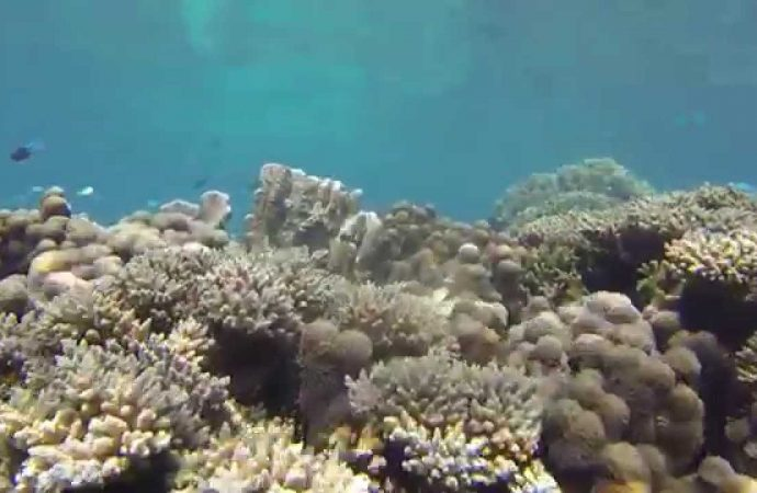NASA Scientists will Analyze Coral Reefs from the Air