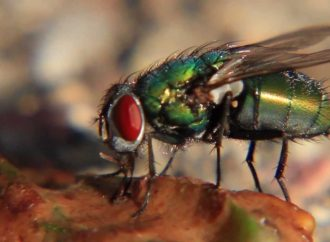 Scientists Classify Insects involved in Forensic Decomposition
