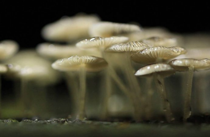 New Fungi Discovered in Puerto Rico