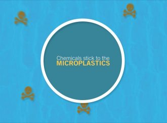 Microplastic Particles Harm Aquatic Organisms more significantly than previously thought