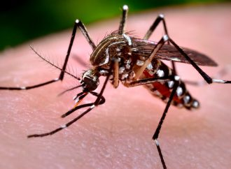 Malaria, a Challenge for Science