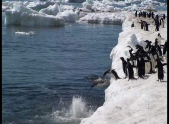 Wastewater from bases in Antarctica affects Marine Life