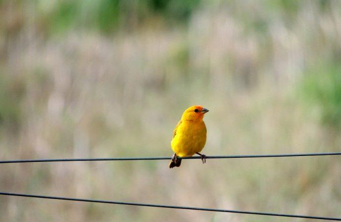 Light-dependent Magnetic Compass of Birds