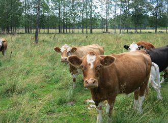 Reducing Methane Production in Ruminants – A Novel Approach to Dealing with Greenhouse Gas
