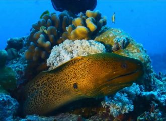 Great Barrier Reef: Already a third of the Coral is dead