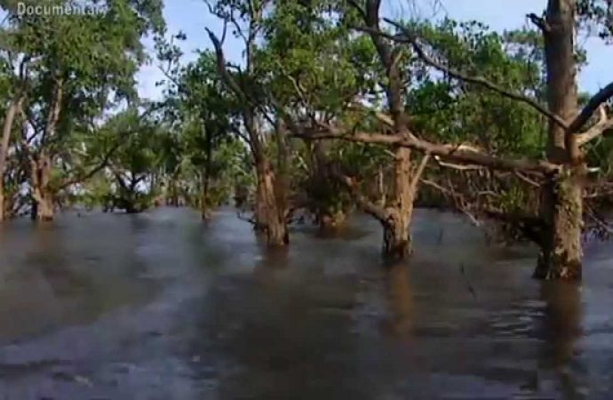 Reefs and Mangroves, the Best 'dyke' of Coastal Protection