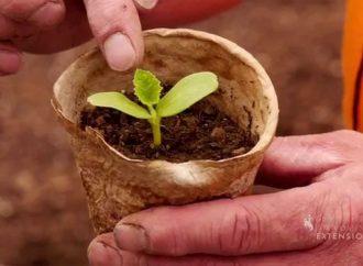 Scientists Combating Diseases using Pumpkin