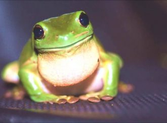 Frogs have New Sexual Position
