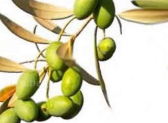 Olive Oil and Mycobacteria improve the Treatment of Bladder Cancer